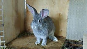 Chinchila cinzenta da raça do coelho em uma gaiola vídeos de arquivo