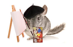 Chinchilla artist Stock Photography