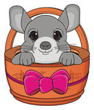 Chinchilla on the basket Royalty Free Stock Images
