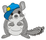 Chinchilla in cap Stock Photography