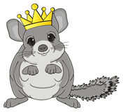 Chinchilla in crown Stock Photo