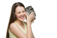 Chinchilla del animal doméstico que besa al dueño Foto de archivo libre de regalías