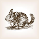Chinchilla dog sketch vector illustration Stock Photography