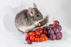 Chinchilla with grapes and tomatoes Royalty Free Stock Images