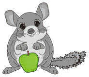 Chinchilla and green food Stock Images