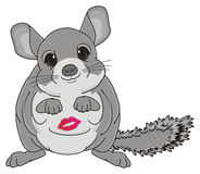 Chinchilla with a kiss Royalty Free Stock Photos