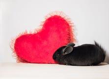 Chinchilla mignon avec le coeur rouge sur le fond blanc Le jour de Valentine Images stock
