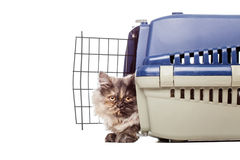 Free Chinchilla Persian Cat In A Pet Cage Stock Image - 96588341