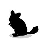 Chinchilla pet rodent black silhouette animal Royalty Free Stock Photo