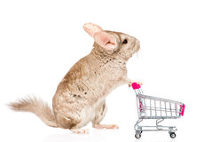 Chinchilla with shopping trolley in profile. isolated on white Stock Photos