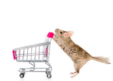 Chinchilla with shopping trolley in profile. isolated on white Royalty Free Stock Photography