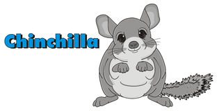 Chinchilla and word Royalty Free Stock Photo