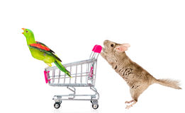 Chinchilla y loro con la carretilla de las compras Aislado en blanco fotografía de archivo