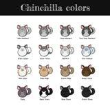 Chinchillafarben Stockfotografie