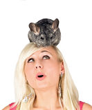 Chinchillas and a girl Stock Image