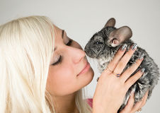 Chinchillas and a girl. Chinchillas touches girl's nose with its nose royalty free stock photography