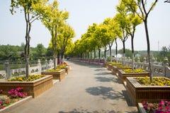 Chinees Azië, Peking, het noorden van Forest Park-paleis, tuinlandschap, wegen, bomen, bloembedden, traliewerk Stock Foto