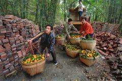 Chinees maakt vrachtwagen van sinaasappelen leeg die in rieten manden zijn. Stock Fotografie