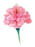 Chinees nam, Chinese Hibiscus toe Royalty-vrije Stock Foto