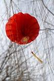 Chinees nieuw jaar Royalty-vrije Stock Foto's