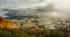 Chinees terraslandbouwbedrijf royalty-vrije stock afbeelding
