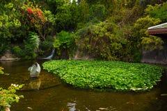 Chineese庭院在Loro Parque 免版税库存照片