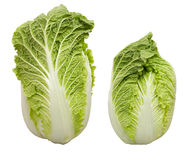 Chineese cabbage royalty free stock photo