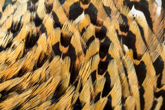 Chineese ringneck pheasant feathers background Royalty Free Stock Images