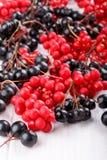 Chinensis Schisandra eller fem-anstrykning bär Aronia eller chokeberry royaltyfri fotografi