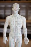 Chinese acupuncture model Stock Images