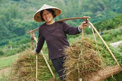 Chinese agricultural farm worker Royalty Free Stock Photos