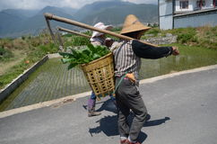 Chinese agriculture workers Stock Photo