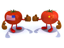 Chinese and American tomato with boxing gloves Royalty Free Stock Photos