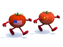 Chinese and American tomato that run Stock Photos