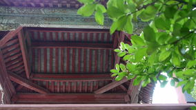 Chinese ancient building eaves,Roof tiles & tree leaves. stock video
