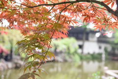 Chinese ancient garden with pond in spring,Suzhou,Jiangsu Royalty Free Stock Image