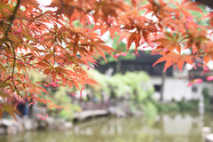 Chinese ancient garden with pond in spring,Suzhou,Jiangsu Royalty Free Stock Photos