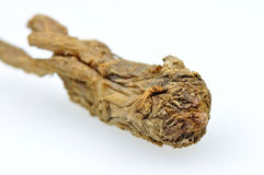 Chinese angelica. Dried root of angelica sinesis stock photography