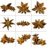 Chinese anise Stock Photography