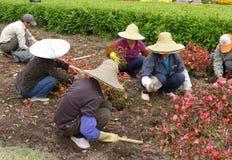 Chinese arbeider die bloemen plant Stock Fotografie