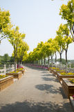 Chinese Asia, Beijing, north of Forest Park palace, garden landscape, roads, trees, flower beds Royalty Free Stock Photography