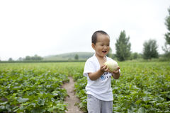 Chinese baby boy picking fruit Stock Images
