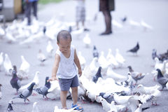 Chinese baby boy playing with pigeon. In the square royalty free stock photography