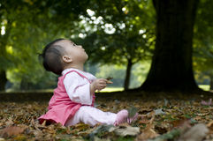 A Chinese baby under tree Royalty Free Stock Image