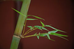 Chinese bamboo Royalty Free Stock Images