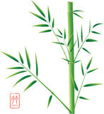 Chinese Bamboo Royalty Free Stock Photography