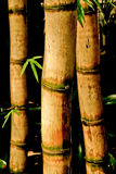 Chinese Bamboo Canes Stock Photos