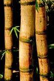 Chinese Bamboo Canes. Kew Gardens, London Stock Photos