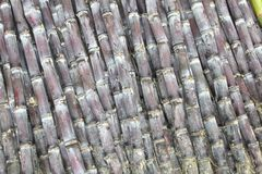 Chinese bamboo in detail; bamboo is very strong and is used to fabricate furniture, rafts, floors and scaffoldings Stock Photo