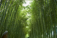 Chinese bamboo park in Shanghai Royalty Free Stock Image